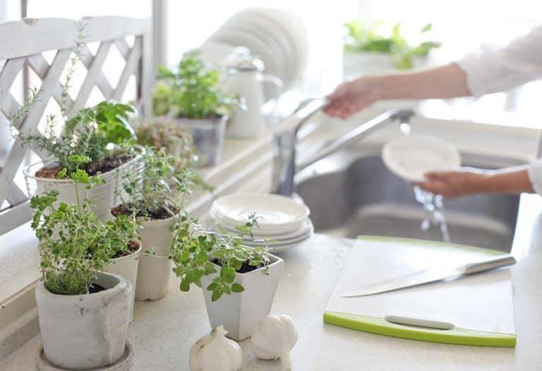 Plantes D Interieur Pour La Decoration De La Cuisine Belle Et