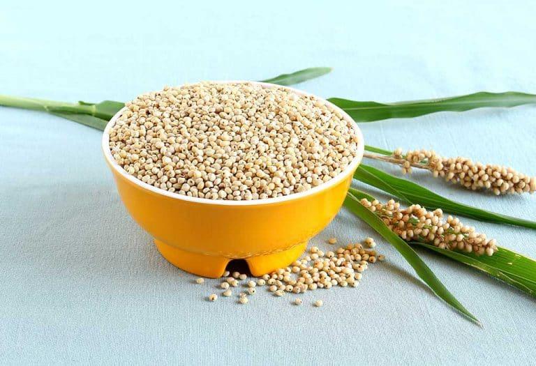 الذرة الرفيعة أنواعها واستخداماتها وتكوينها وخصائصها المفيدة حبوب الذرة