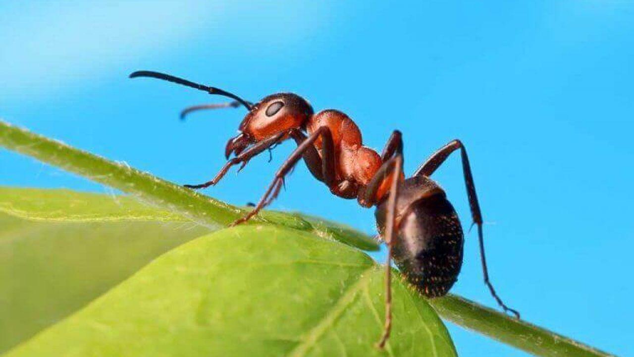 Faits fascinants et informations sur les fourmis pour les enfants Le plus  doux haom