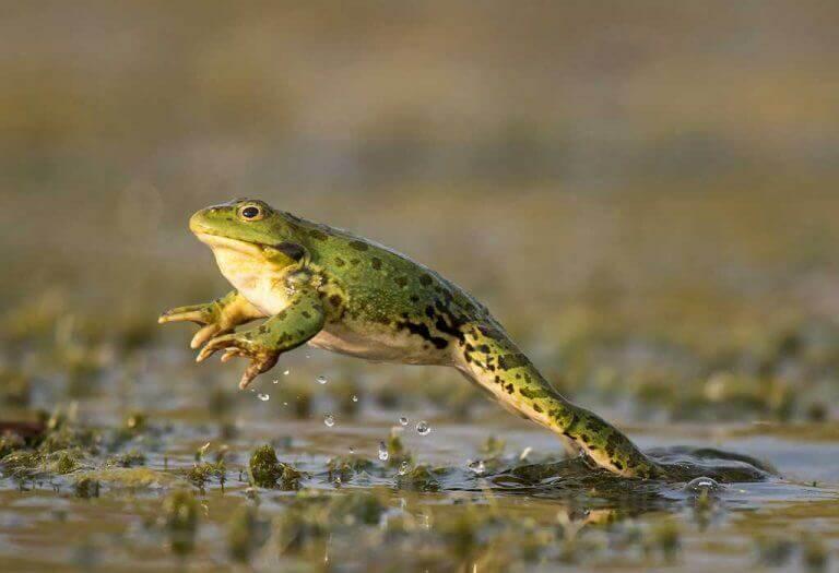 Çocuklar için kurbağalar hakkında 15 muhteşem gerçek En tatlı ev